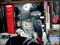 _39784261_parrot3_roselli_203.jpg